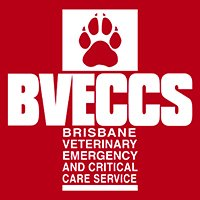 Emergency Vet Brisbane | 24 Hour Vet | After Hours Pet Emergency