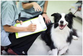 dog admitted into hopsital