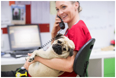 dog vet on phone